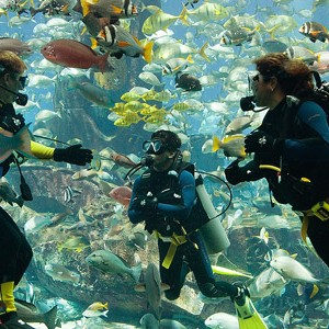Atlantis-Dubai-palm-divingexperience