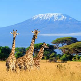 Where To Go When Luxury Holidays Kenya