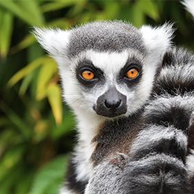 Where To Go Where Holiday Calendar Madagascar