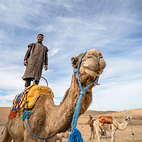 Thumbnail Camel Ride In Marrakech Palmeraie Morocco Holidays