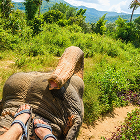 Thumbnail Elephant Safari Park And Ride Tour Bali Holidays