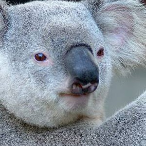 Luxury Holidays Australia - Quarry, Hamilton Island - Wildlife