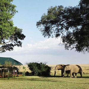 Luxury South Africa Holiday Packages Governors Camp, Kenya Elephants Come To Bar