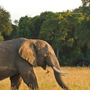 Luxury South Africa Holiday Packages Governors Camp, Kenya Elephants In Safari1