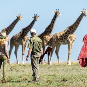 Luxury South Africa Holiday Packages Governors Camp, Kenya Giraffes