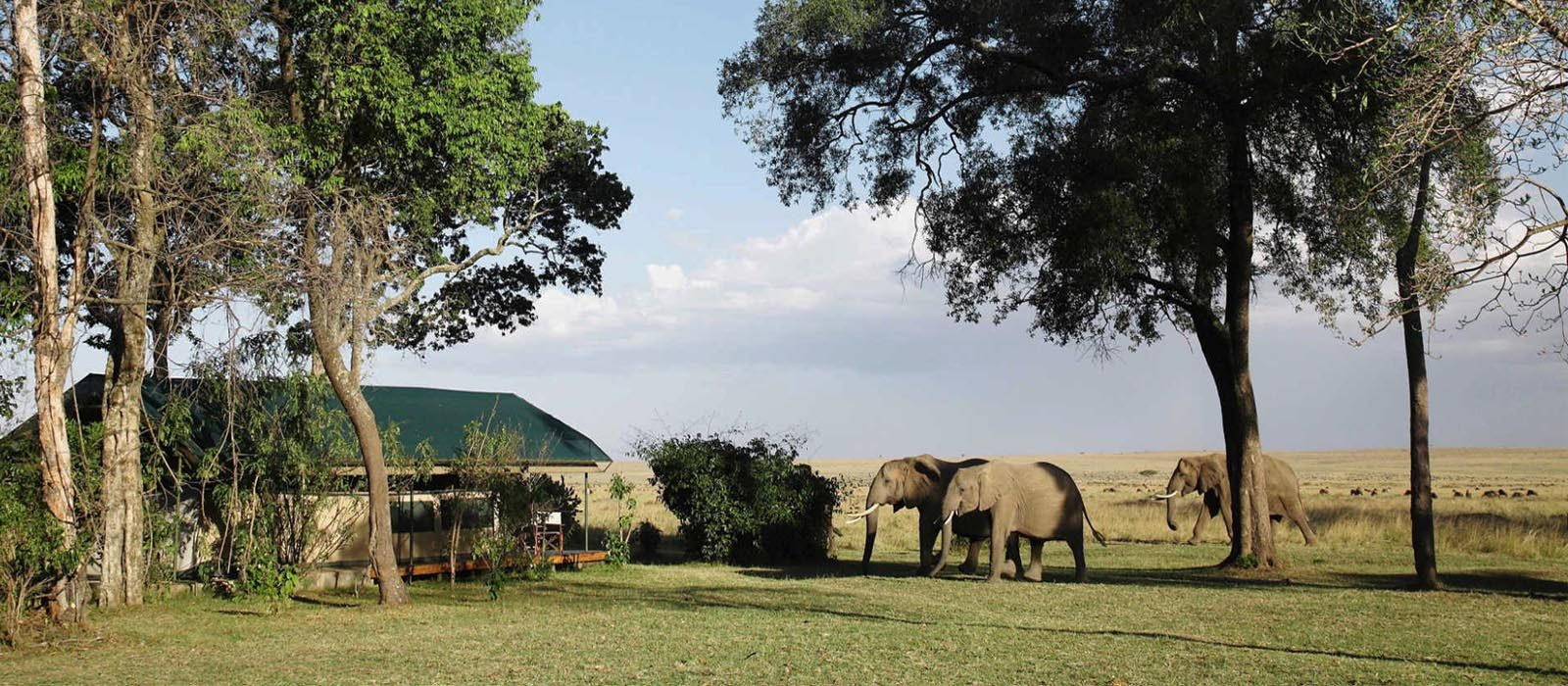Luxury South Africa Holiday Packages Governors Camp, Kenya Header