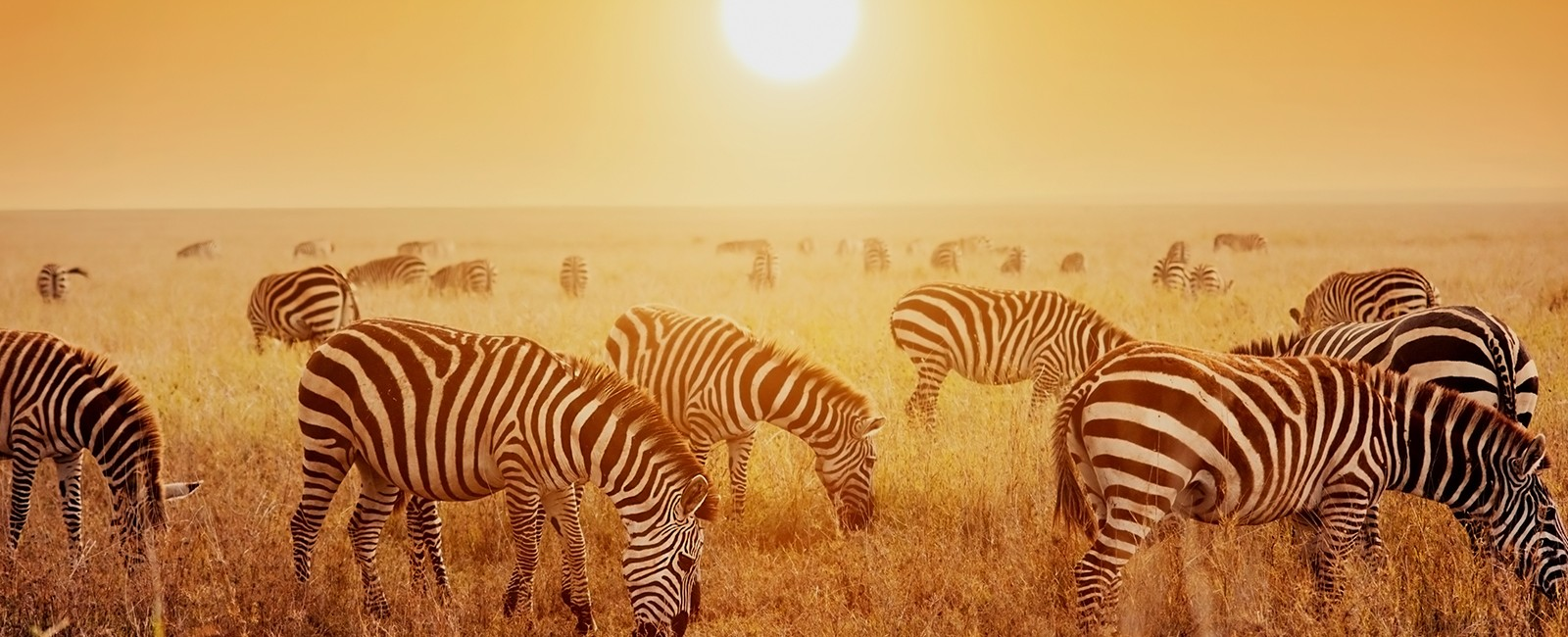 safari holidays - luxury safari - luxury holidays - header
