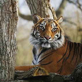 Rathambore-National-Park---Golden-Triangle-Tour---India-Tours-