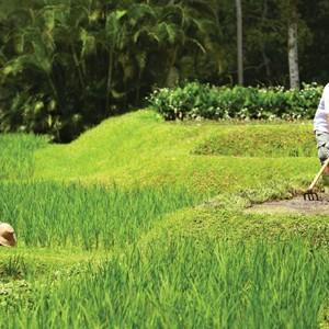 Rice Paddy - Four Seasons Bali at Sayan - Luxury Bali Holidays