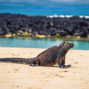 Santa Cruz Island 2 South America Holiday Packages