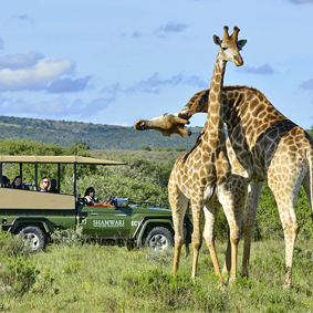 Shamwari Game Reserve - South Africa - thumbnail