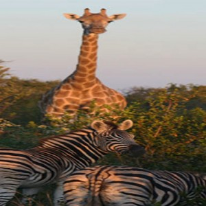 madikwe-safari-lodge-south-africa-holiday-wildlife