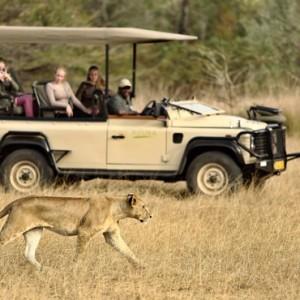 big cat safari - Azura Selous Game Reserve - Luxuxry Tanzania Holidays
