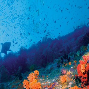Constance Le Prince Maurice - Luxury Mauritius Holiday Package - diving