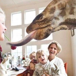 Family experiences - Giraffe Manor - Luxury Kenyan Honeymoon Packages