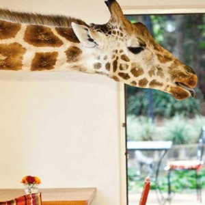 Feeding time - Giraffe Manor - Luxury Kenyan Honeymoon Packages
