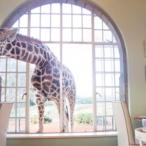 Giraffe Breakfast - Giraffe Manor - Luxury Kenyan Honeymoon Packages