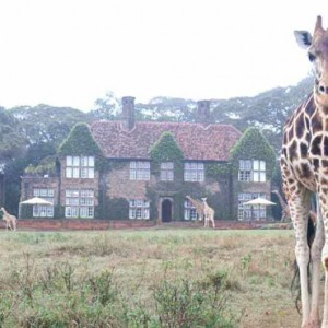 Giraffe - Giraffe Manor - Luxury Kenyan Honeymoon Packages