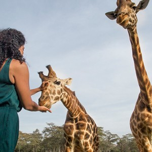 Giraffe feeding - Giraffe Manor - Luxury Kenyan Honeymoon Packages