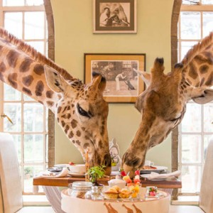 giraffe dining - Giraffe Manor - Luxury Kenyan Honeymoon Packages