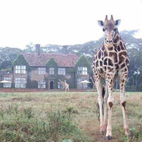 thumbnail - Giraffe Manor - Luxury Kenyan Honeymoon Packages