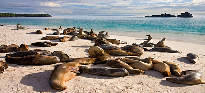 Galapagos Islands Bucket List Holidays For Families Luxury Family Holiday Packages