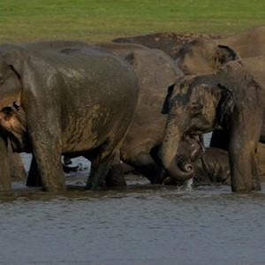 Cinnamon Lodge Habarana - Luxury Sri Lanka Holiday Package - elephants