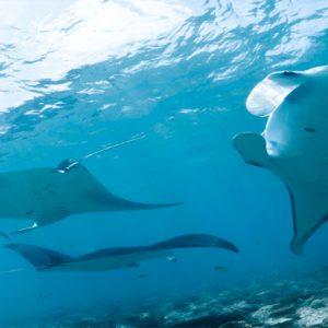Kuramathi Maldives Luxury Luxury Maldives Holiday Packages Stingrays