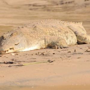Luxury Safari Holiday Packages Serena Mivumo River Lodge Wildlife 2