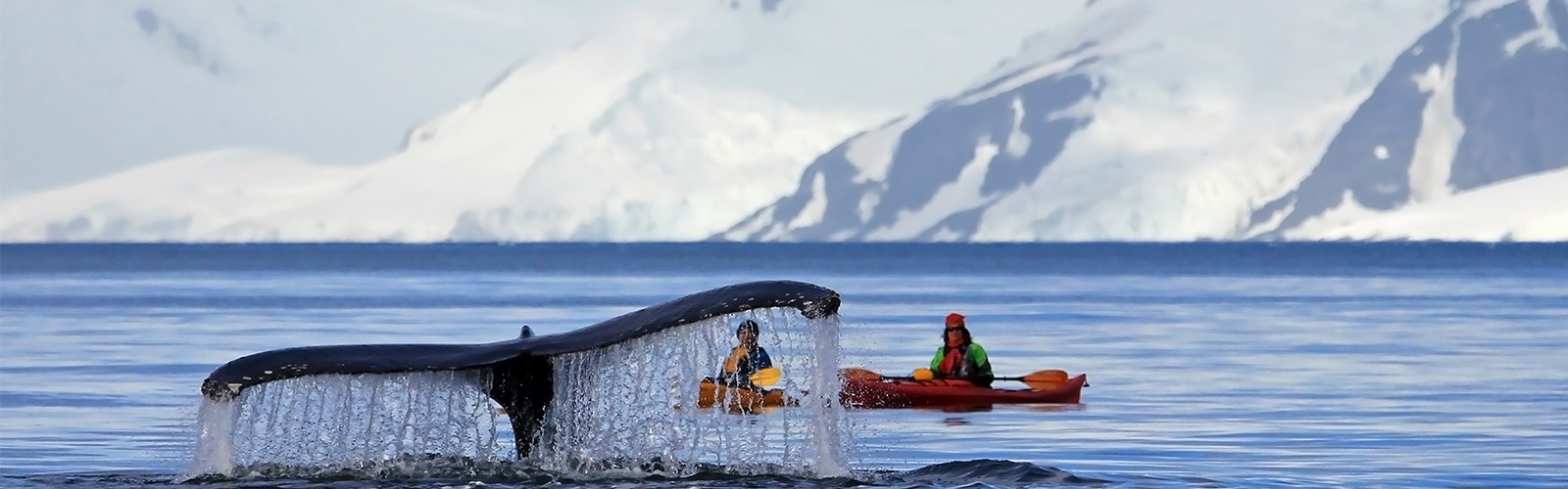Antarctica And Chilean Fjords Header