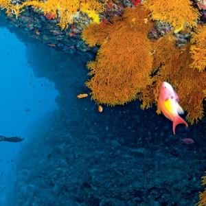 Luxury Maldives holiday packages - Kanuhura Maldives - marine life
