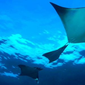 Marine Life Dhigali Maldives Luxury Maldives Honeymoon Packages