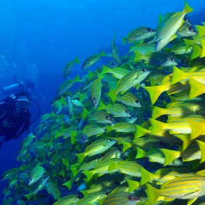 Scuba Diving Dhigali Maldives Luxury Maldives Honeymoon Packages