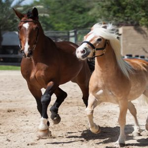 JA Palm Tree Court Dubai holiday Packages Horse Riding