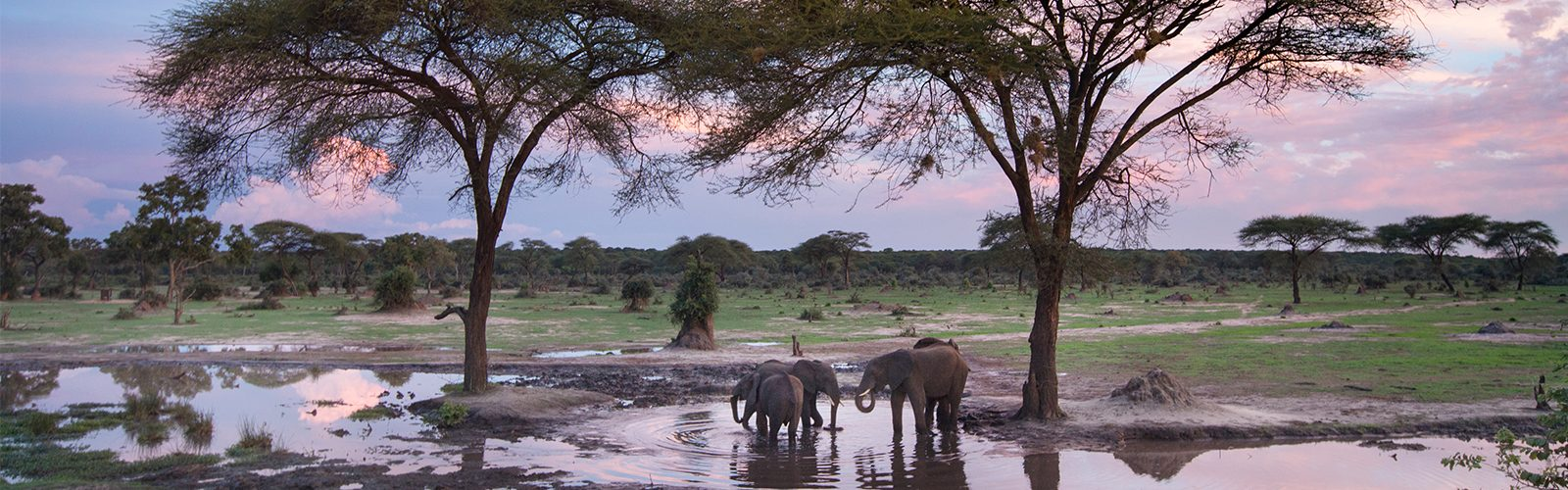 Top Destinations To See Elephants Header