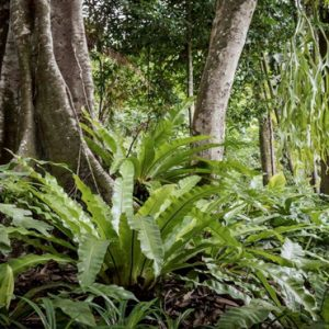 Luxury Malaysia Holiday Packages The Datai Langkawi Nature Walking In The Rainforest