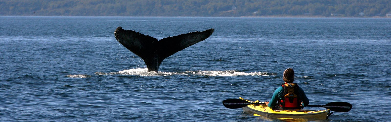 The Best Destinations In The World For Whale Watching Header