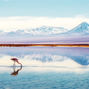Atacama South America Holiday Packages
