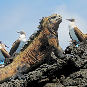 Isabela Island 2 South America Holiday Packages