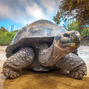 Giant Tortoise South America Holiday Packages