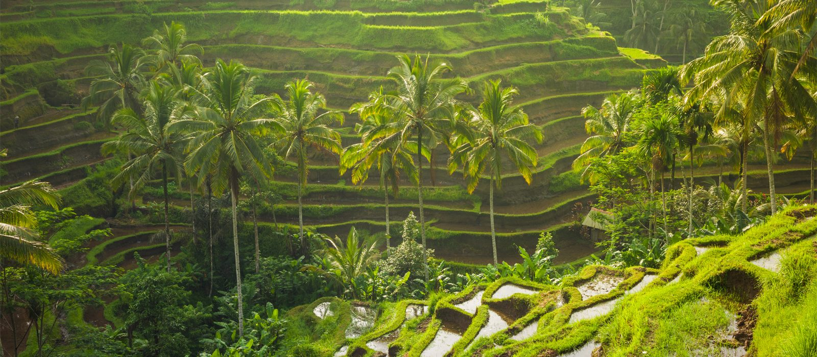 Header Best Things To Do In Bali