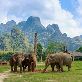 Luxury Thailand Holiday Packages Elephant Hills 3