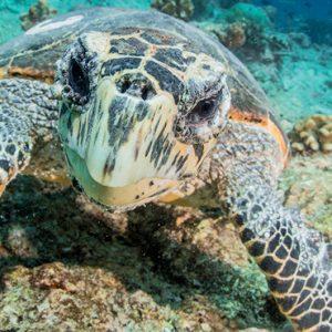 Luxury Maldives Holidays Fairmont Maldives Sirru Fen Fushi Marine Life