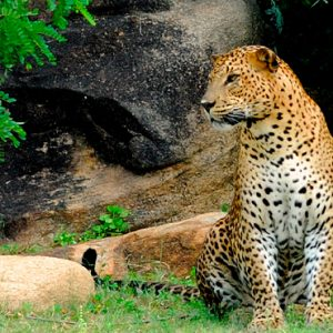 Luxury Sri Lanka Holidays Shangri La's Hambantota Golf Resort & Spa Wild Life
