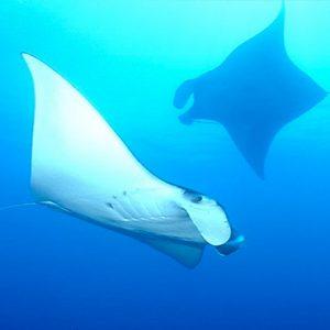 Luxury Thailand Holidays The Sarojin Marine Life