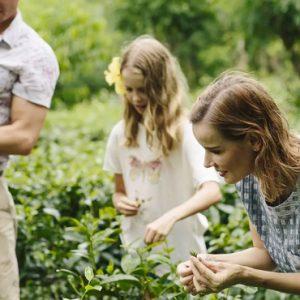 Tea Plantation Visit Anantara Kalutara Sri Lanka Holidays