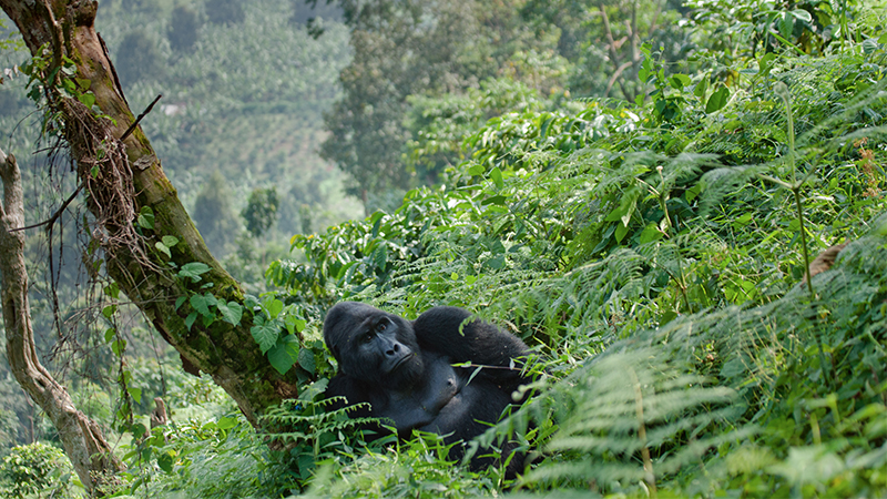 Bwindi Impenetrable National Park Safari Holiday Packages