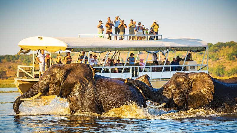 Chobe National Park Safari Holiday Packages