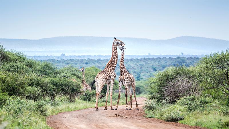 Kruger National Park Safari Holiday Packages