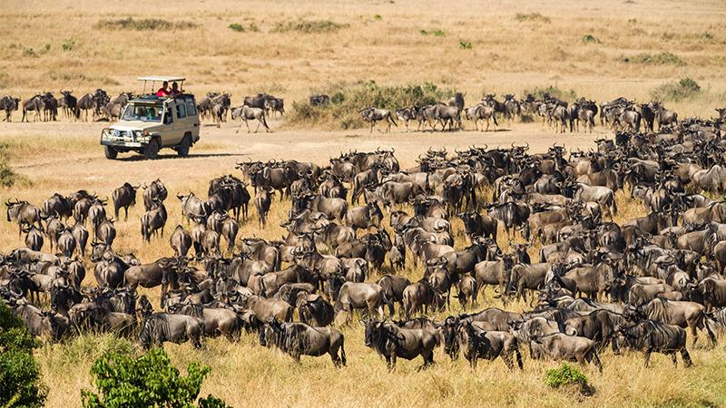 Maasai Mara Safari Holiday Packages
